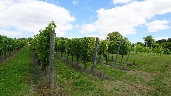 Cottonworth Vineyard 14 Aug 2016
