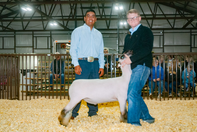 kay_county_showdown_sheep_20191207-118.jpg