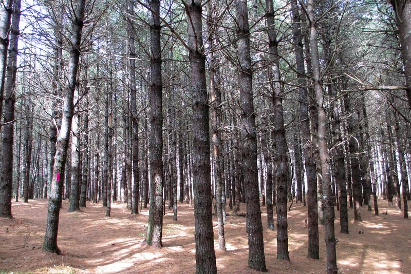 Mac's Gap Trail - 3,700'