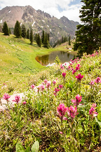 Wildflowers in the Gore Range, CO