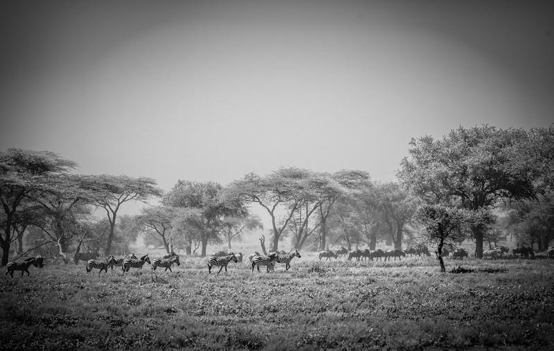 Tanzania_Feb_2018-281.jpg
