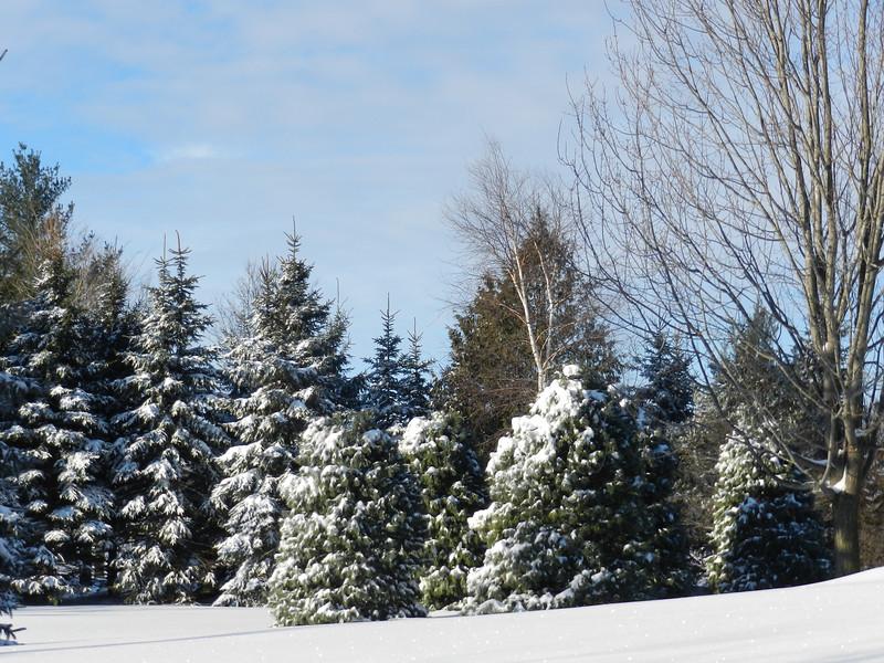 fantastic snow-7150.jpg