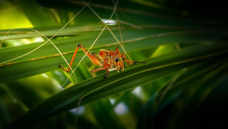 Grasshoppers 107.jpg