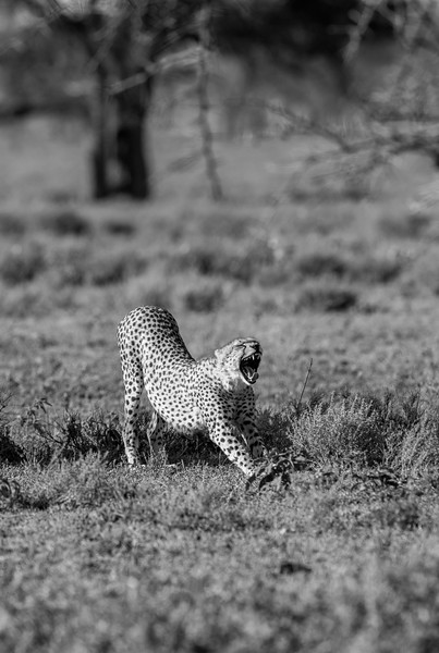 Tanzania_Feb_2018-261.jpg