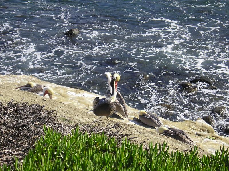 San Diego 2009 006.JPG