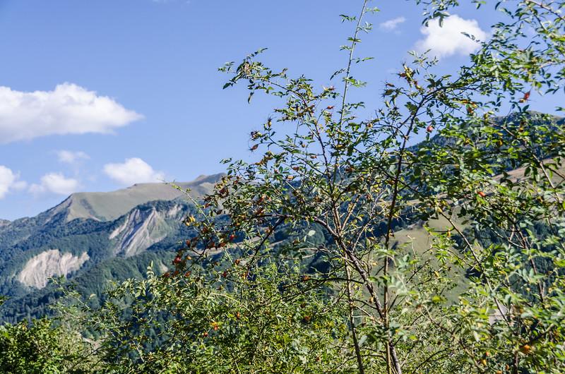 Georgia.Kazbegi.332.jpg