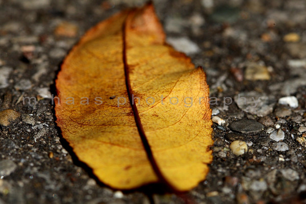fall | cherokee park