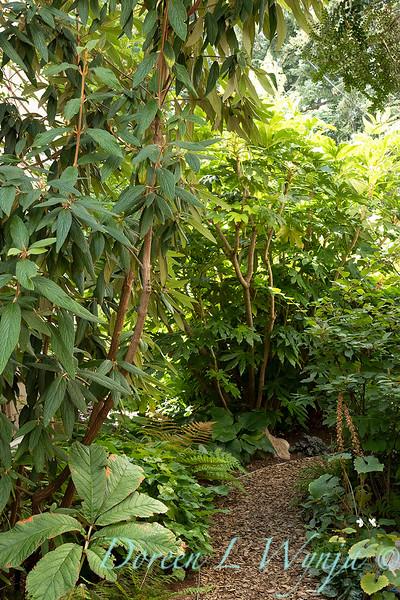 Lisa Bauer - designer's garden_1331.jpg