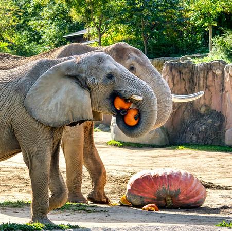 Elephant Pumpkin Party