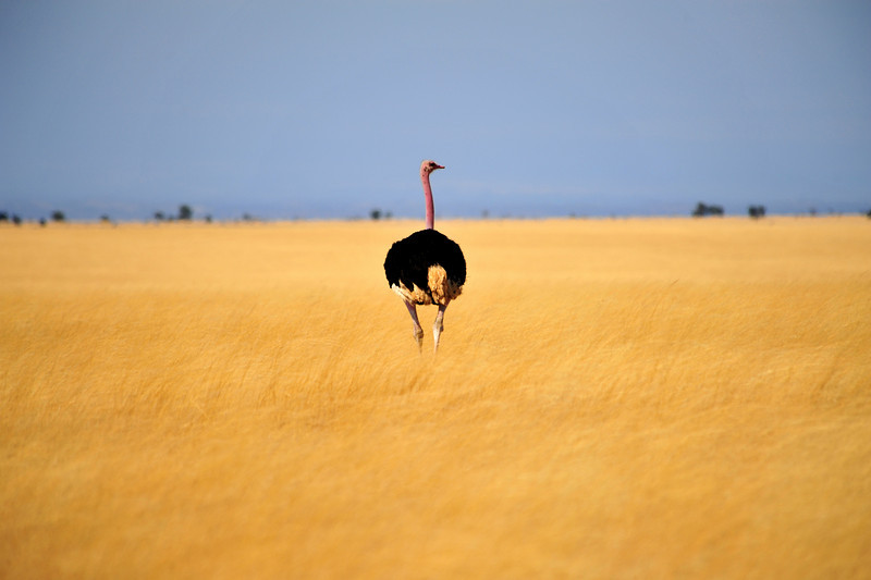 Africa 2010-039.JPG
