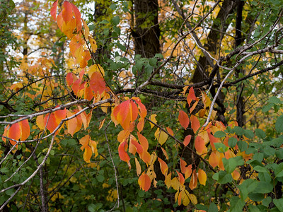 River Trail - Autumn Colours - Hassy - Sept 23