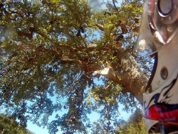Under the shade of the shoe tree