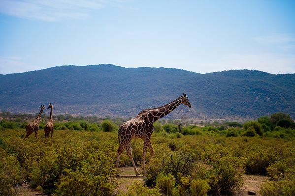 Safari Trip II