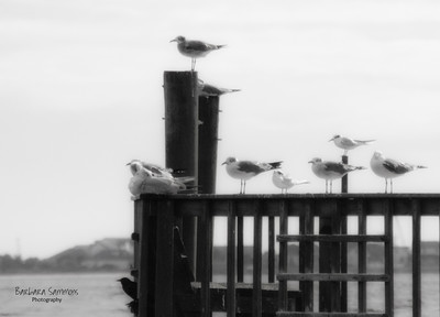 """The """"Lunch Bunch"""" - Southport Pier"""