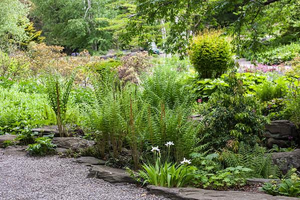 Botanical Gardens - Spring