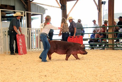 Market Swine 12