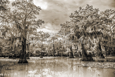 Caddo Lake in Black and White Gp10