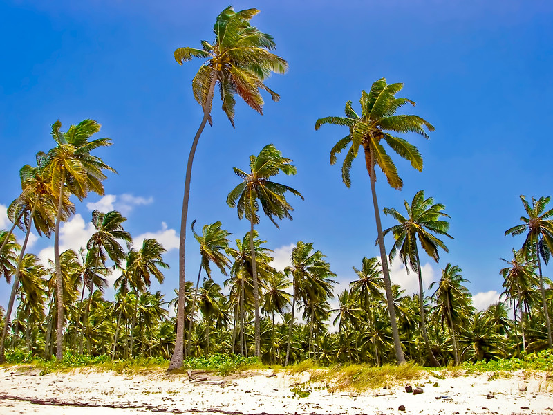 Palm trees lining the coast of a small tropical island.