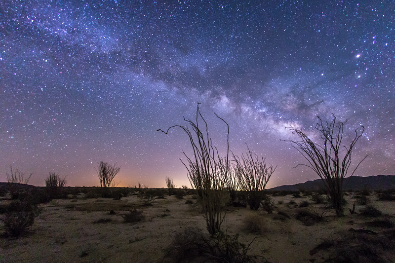 Ocotillo forest and the Milky Way