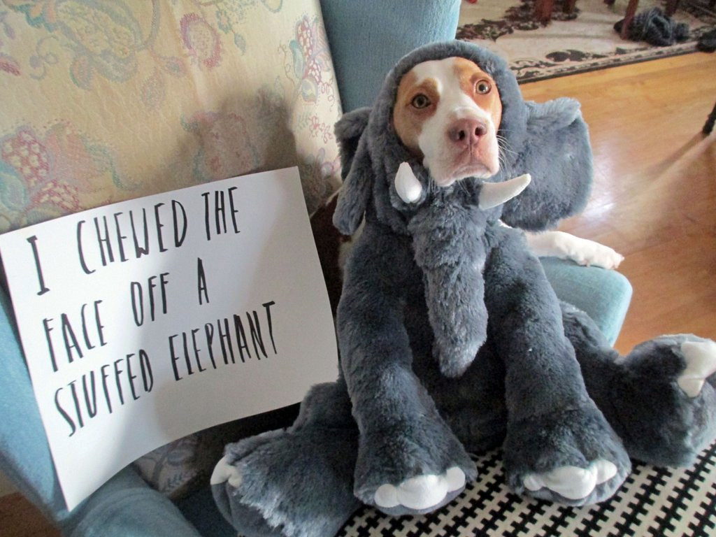 . <p>2. DOGS <p>Incapable of feeling shame, which is fine, considering how much time they spend licking themselves.   (AP Photo/Jeremy Lakaszcyck)