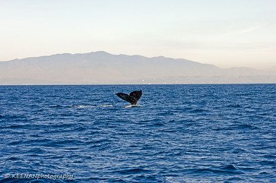 1/20/14, Whale Watching