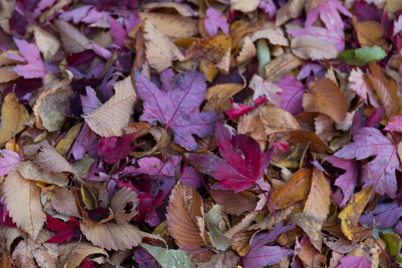 2012_10_ 20 Fall Leaves 021.jpg