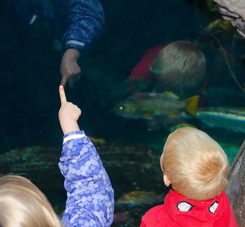 2017.11.05-Aquarium