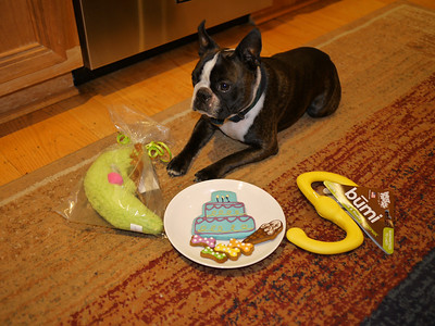 Philo the Boston Terrier's Second Birthday