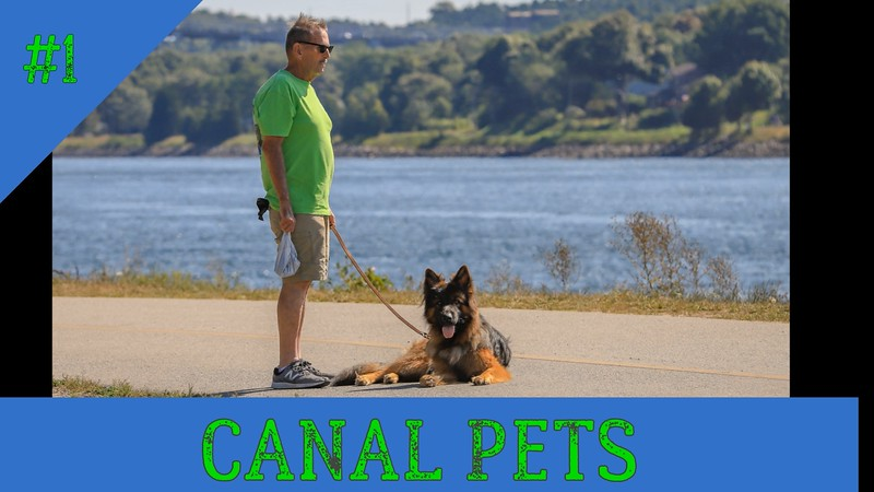 Canal Pets Year 2020