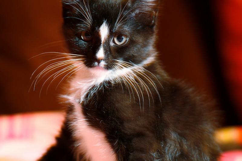 Kitten Eddie