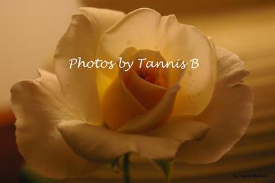 Flowers-2009