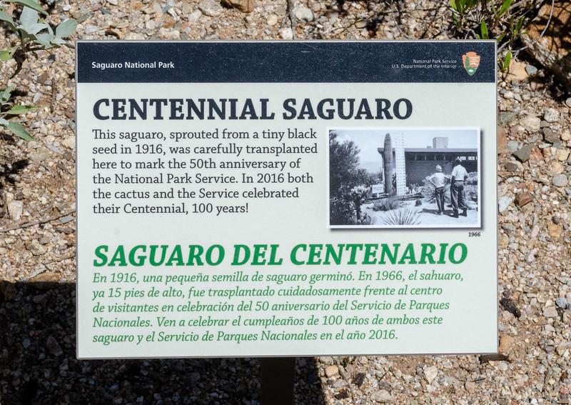 20180902-Saguaro-NP-East-4239.jpg