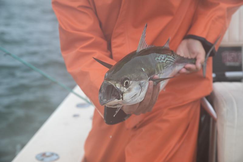 capecodfalsealbacoreflyfishing.fall18bcarmichael (4 of 44).jpg