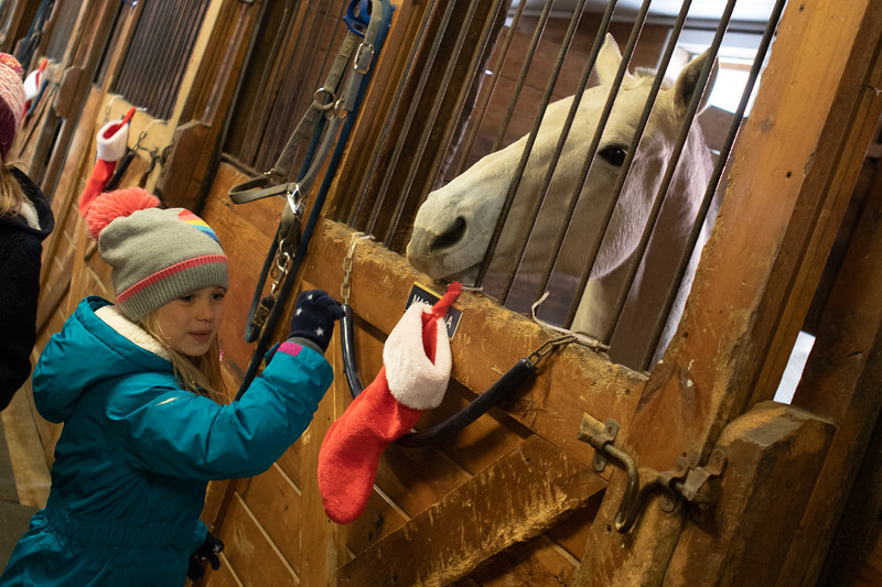 FPC_Horses and Holidays_2019_ ATC99466.jpg