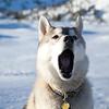Afternoon Yawn