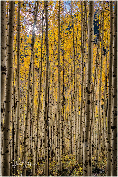 JM8_7955 Aspen Forest LPN r2.jpg