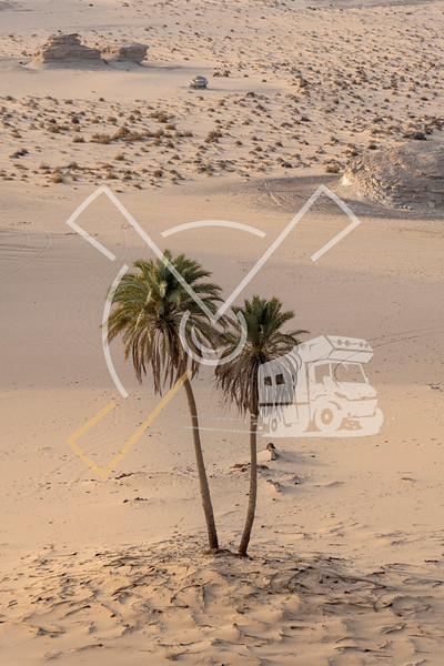 Aerial view of two lonely palm trees against a sandy desert background