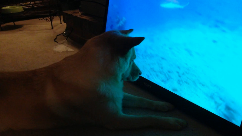 Fox and DogTV 1