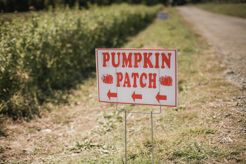 pumpkin picking 10-2016 _IMG_0802.jpg