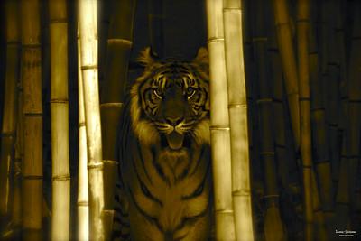 Wildlife-Land Mammals