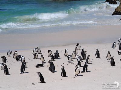 Pengiuns on the beach