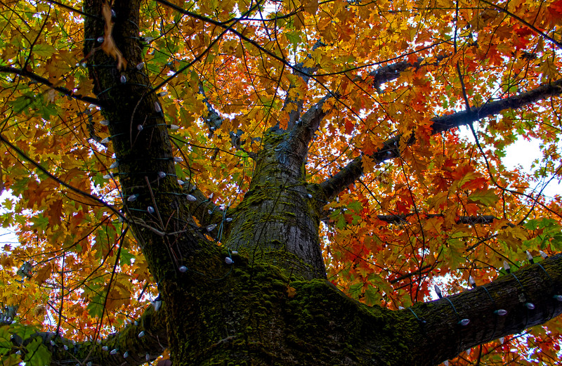 Fall_Colors_HDR4.jpg