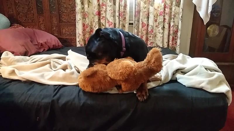 Roxie Got a Chew Toy