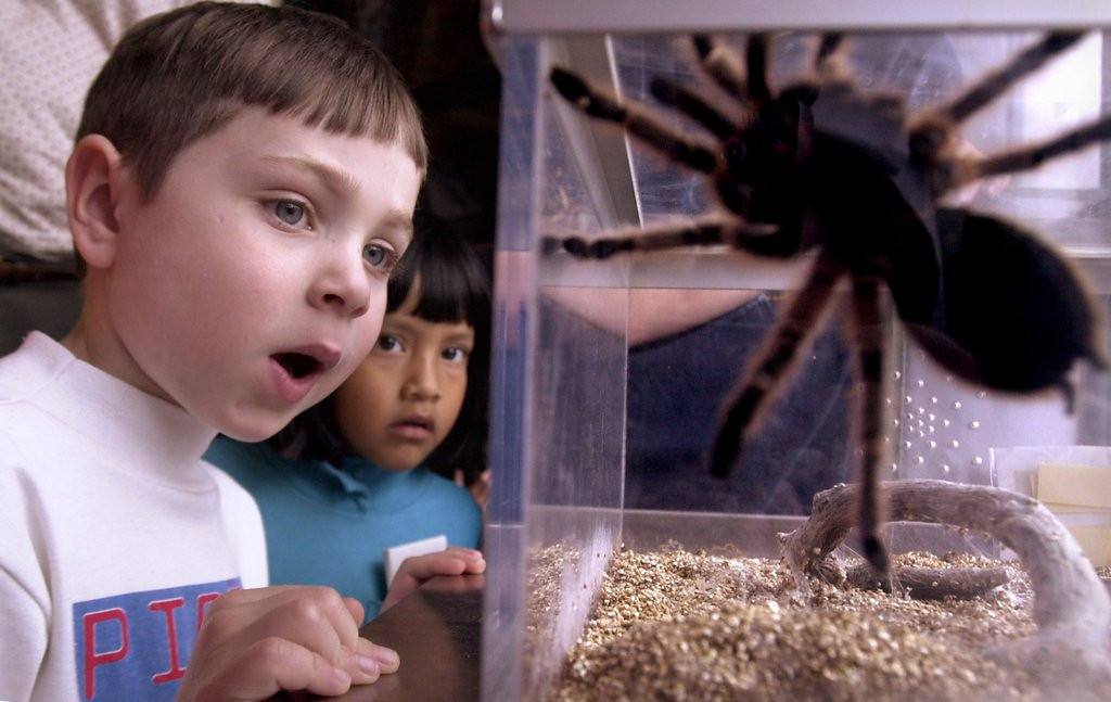 . <p>19. SPIDERS <p>They have more than 40,000 species, yet they all make the same sound when you step on them.   (Stefan Zaklin/Getty Images)