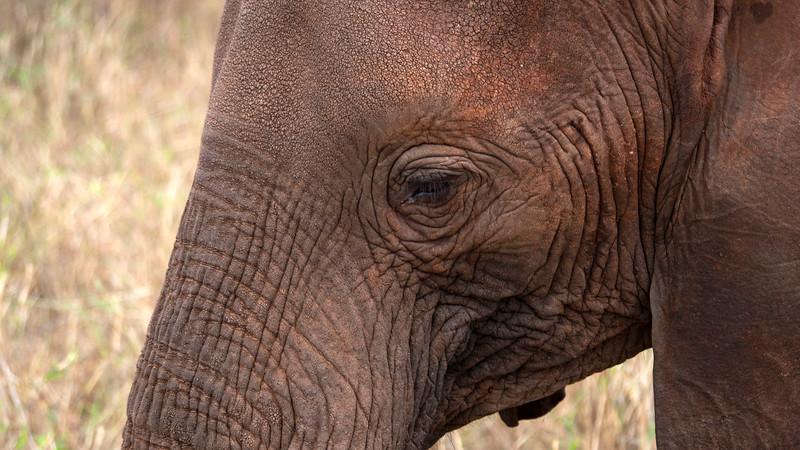 Tanzania-Tarangire-National-Park-Safari-Elephant-11.jpg