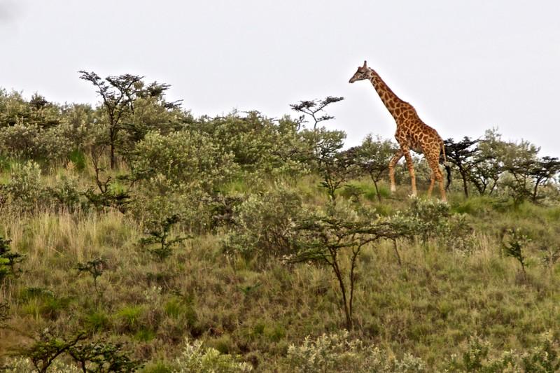 Kenya.Card3.02.2014 401