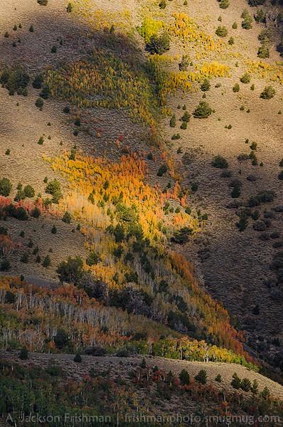 Dappled shade and aspens, Toiyabe Range, Nevada, September 2013.
