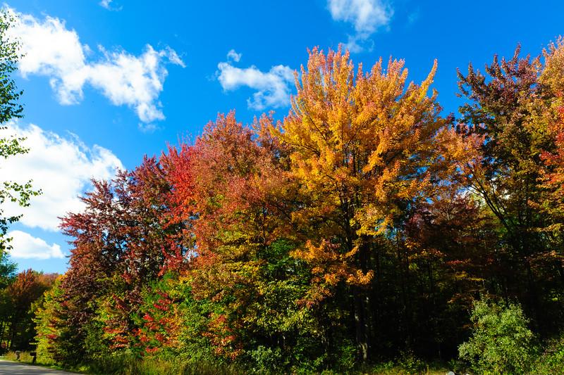 20141009 Autumn-3139-2.jpg