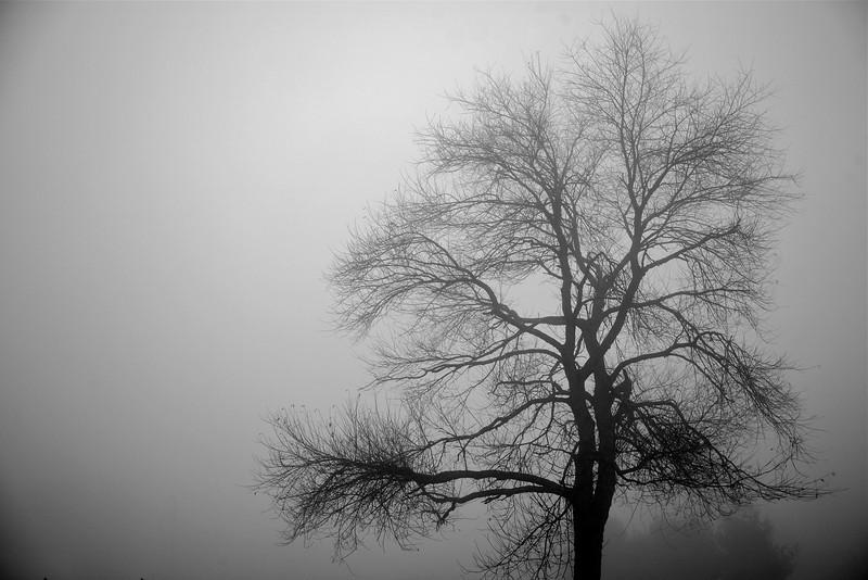 mist, dogs, october 26 09 (2 of 1)-5.jpg