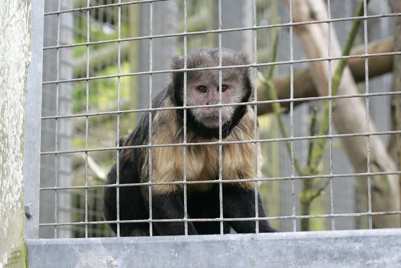 Newquay Zoo 368.jpg